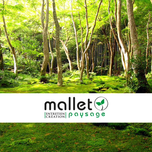 creation-logo-site-internet-carte-de-visite-habillage-vehicule-mallet-paysage-aleb-design